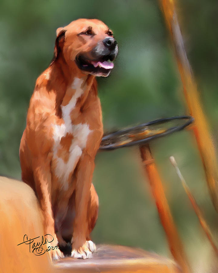 Dog Painting - Buck by Colleen Taylor