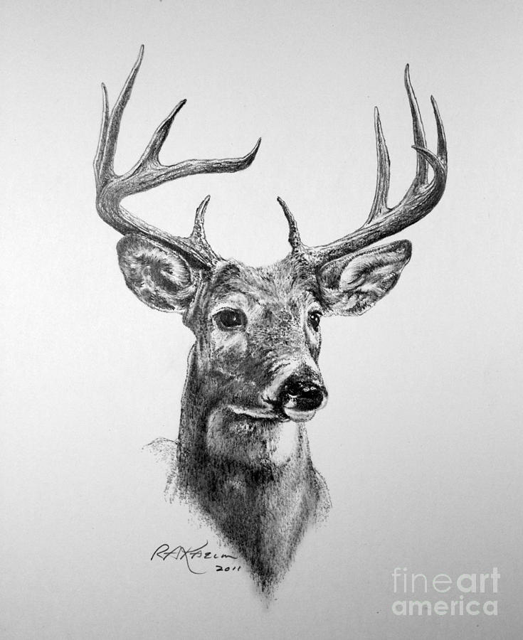 It's just an image of Modest White Tailed Deer Drawing