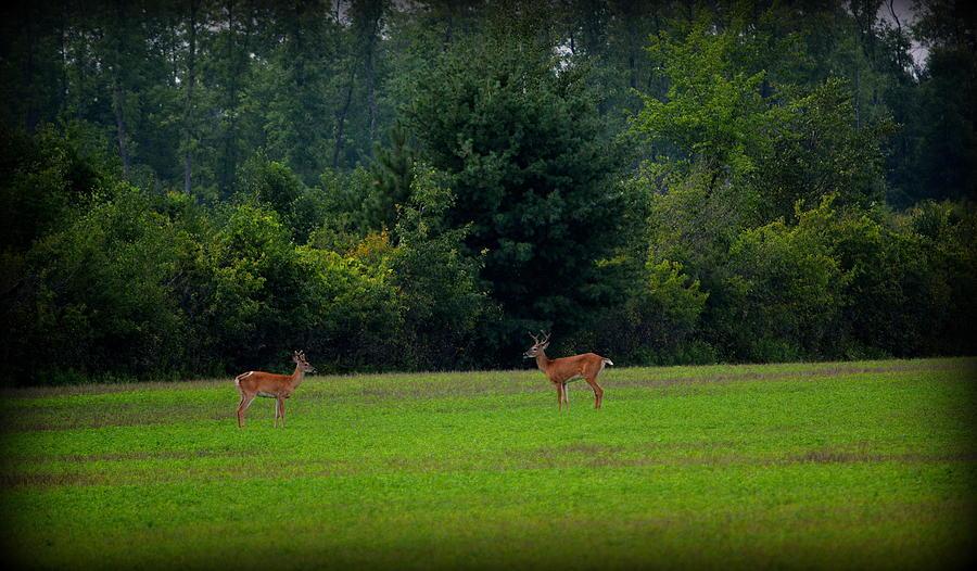 Buck Spirits by Kimberly Woyak