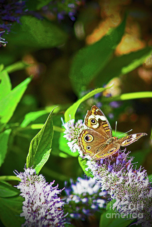 Nature Photograph - Buckeye Butterfly On The Move 1 by Don Baker