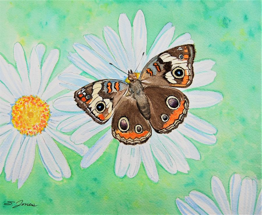 Buckeye on Oxeye by Sonja Jones