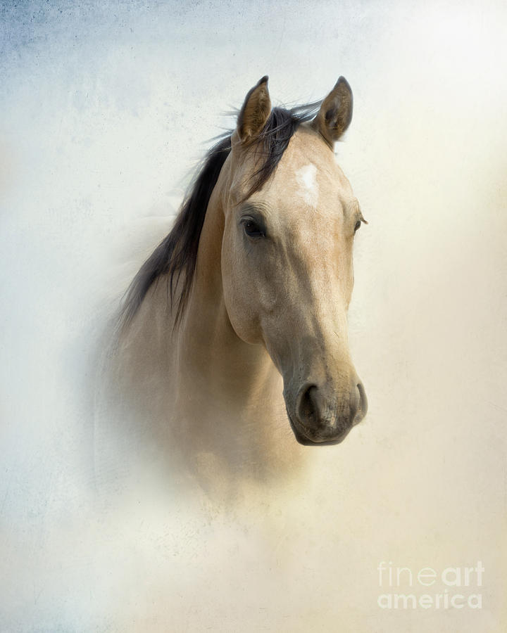Horse Photograph - Buckskin Beauty by Betty LaRue
