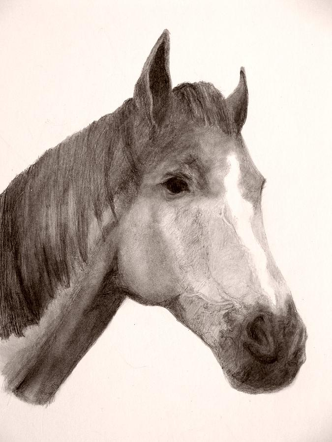 Horse Head Drawing Drawing - Bud 2 by Susan Tilley