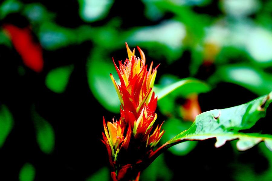 Macro Photograph - Bud  by Alireza Khoddam