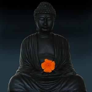 Buddah Photograph - Budda Blossom by Richard Nodine