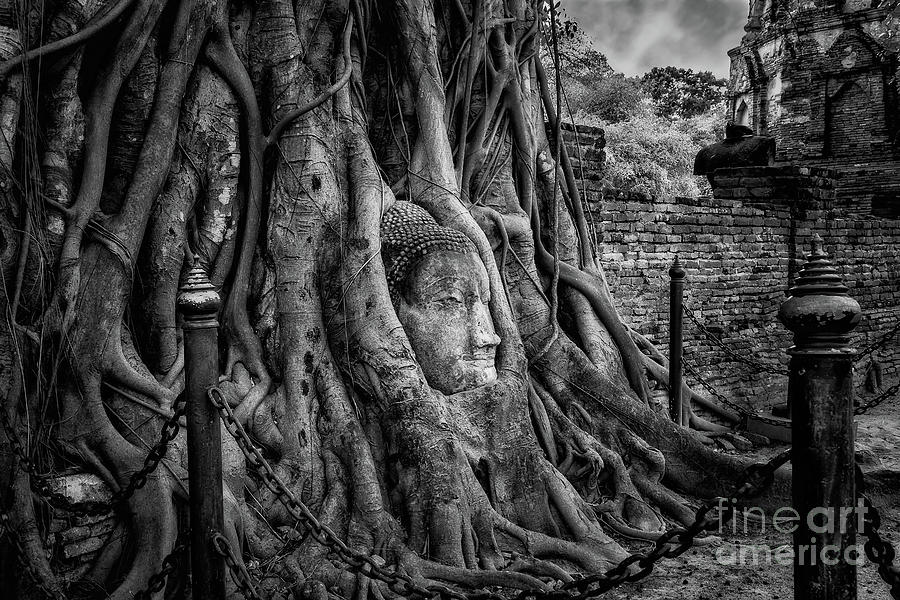 Buddha Head Photograph - Buddha Head Ayutthaya by Adrian Evans