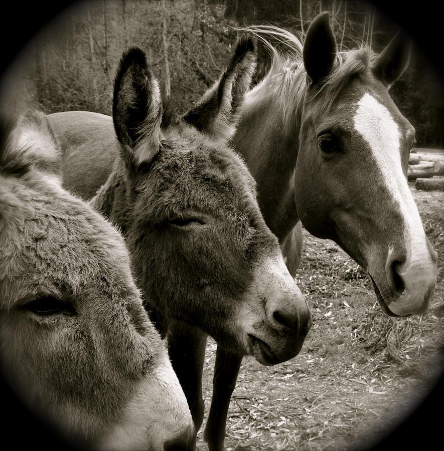 Horse Photograph - Buddies by Hillary  MacDonald