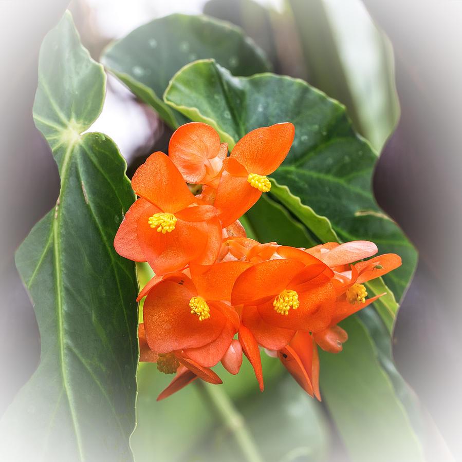 Budding Orange Photograph