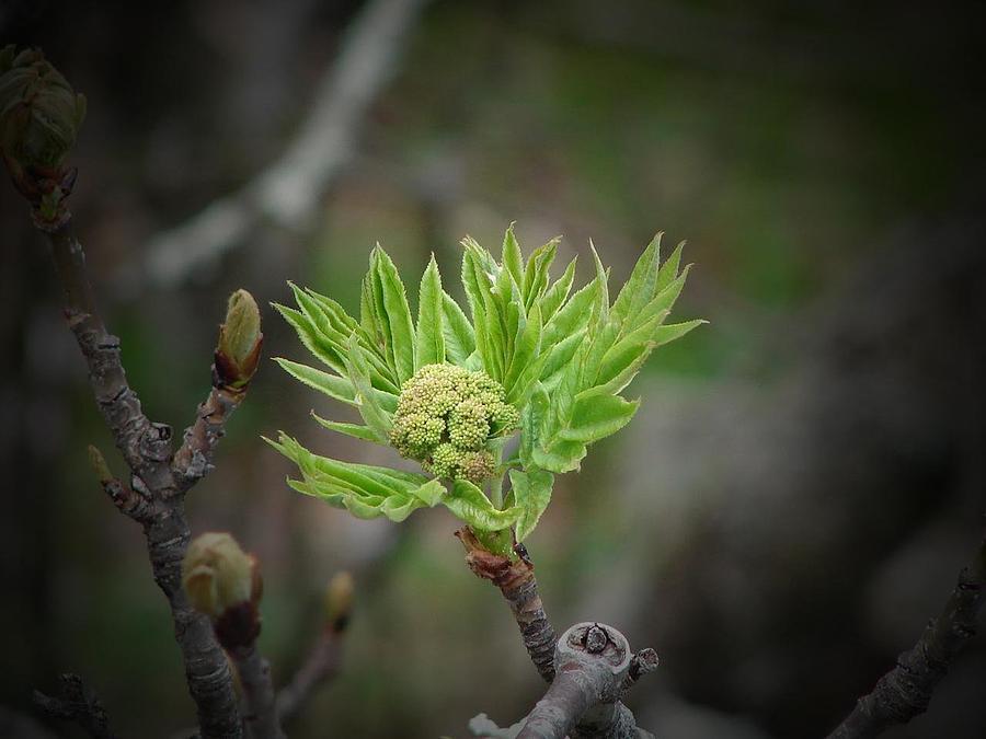 Green Photograph - Budding Spring by Jen McKnight