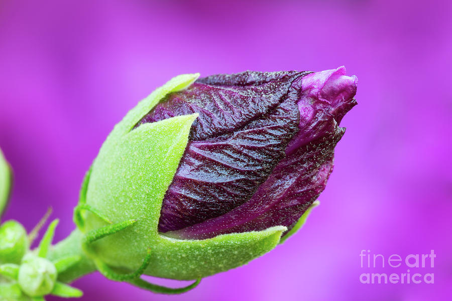 Aiken Photograph - Budding by Steven Dillon