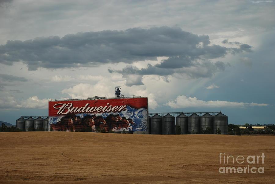 Budweiser by Jim Goodman