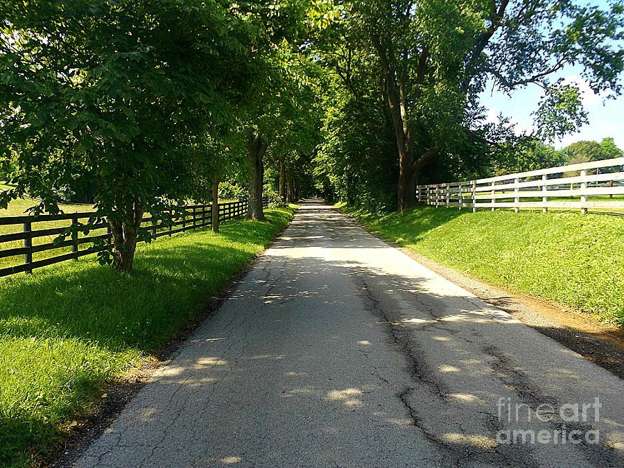 Bluegrass Morning by David Neace