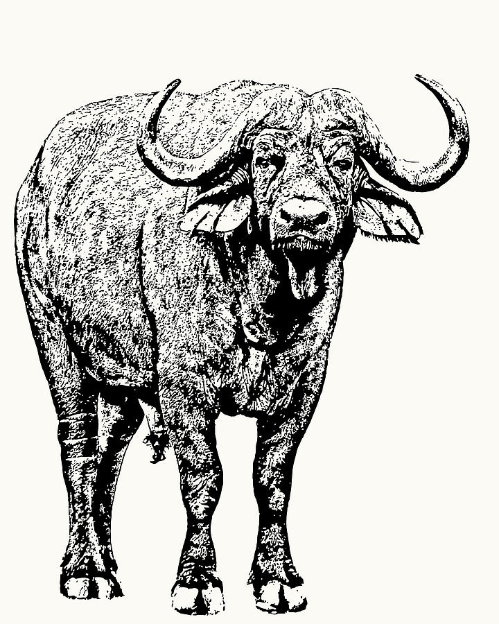 Buffalo Bull, Full Figure by Scotch Macaskill