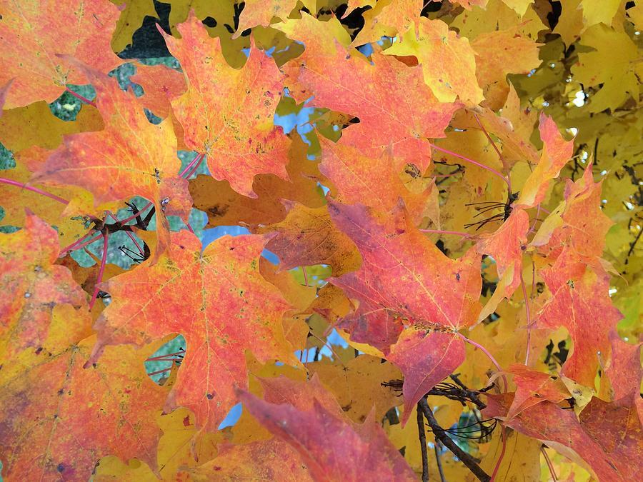 Buffalo Photograph - Buffalo Fall Leaves by Mark Weber