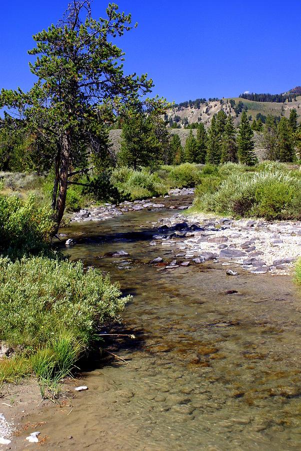 Montana Photograph - Buffalo Fork by Marty Koch