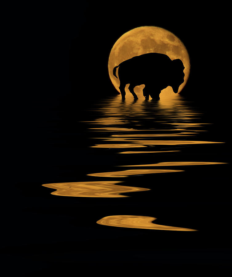 Buffalo In The Moonlight Photograph by Shane Bechler