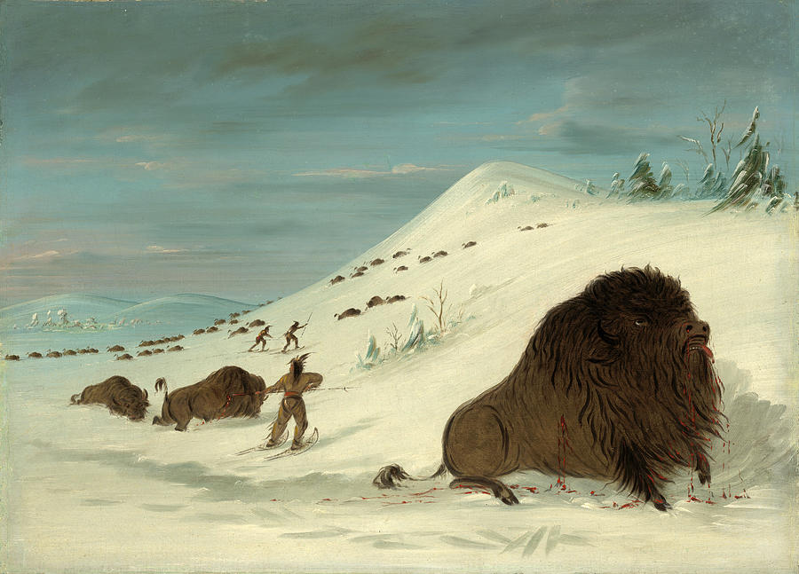 George Catlin Painting - Buffalo Lancing In The Snow Drifts. Sioux by George Catlin