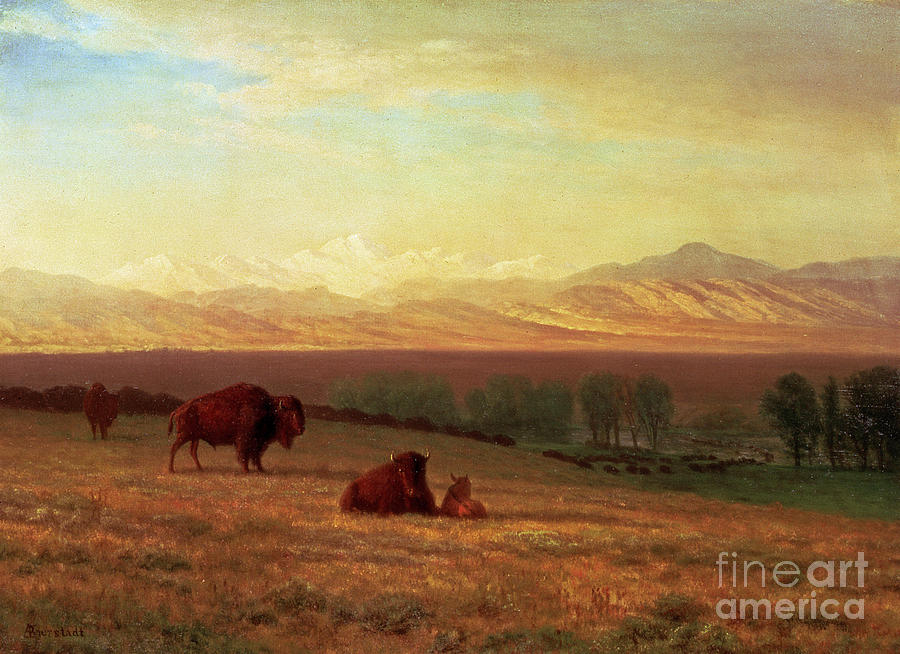 Albert Bierstadt Painting - Buffalo On The Plains by Celestial Images