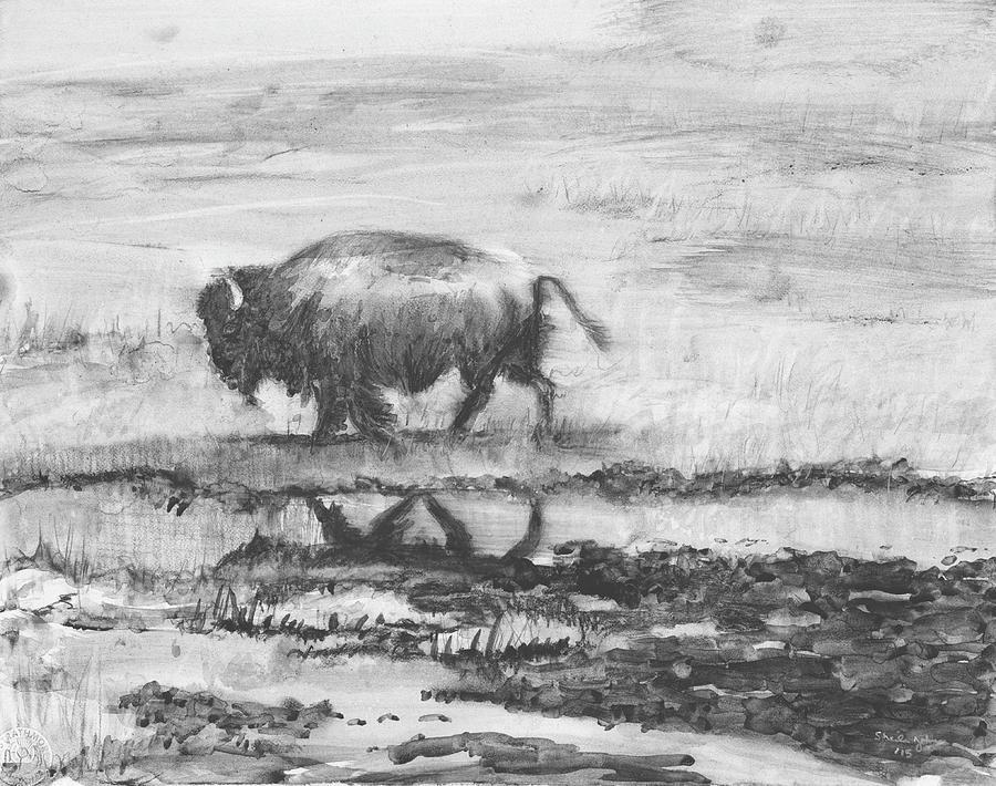 Buffalo Reflection by Sheila Johns