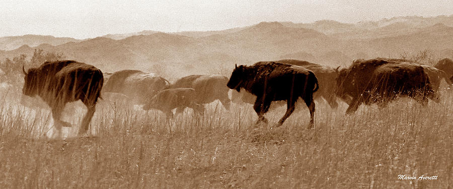 American Buffalo Photograph - Buffalo Stampede by Marvin Averett