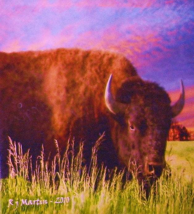 Buffalo Painting - Buffalo Sunset by Roberta Martin