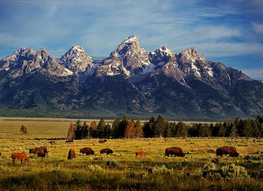 Buffalo Photograph - Buffalo Under Tetons 2 by Leland D Howard