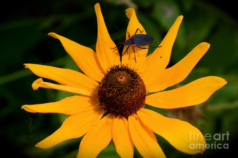 Flower Photograph - Bug On A Flower by Sherri Williams