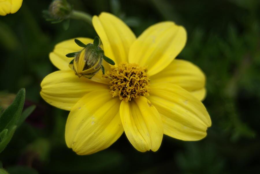Flower Bug Photograph - Bugs Life by Heidi Poulin