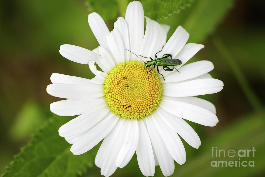 Bugs Life by Paul Farnfield