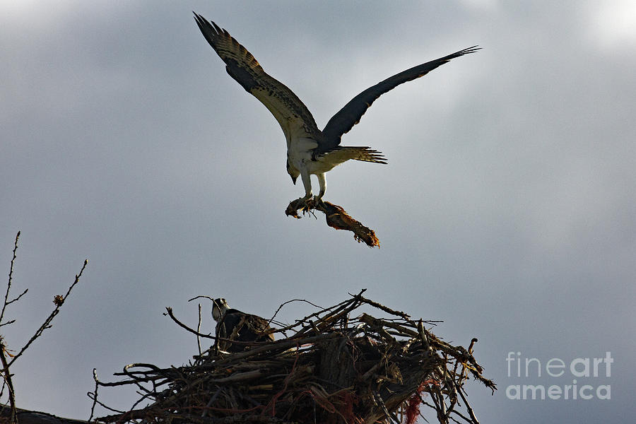 Building the Nest by Bob Hislop