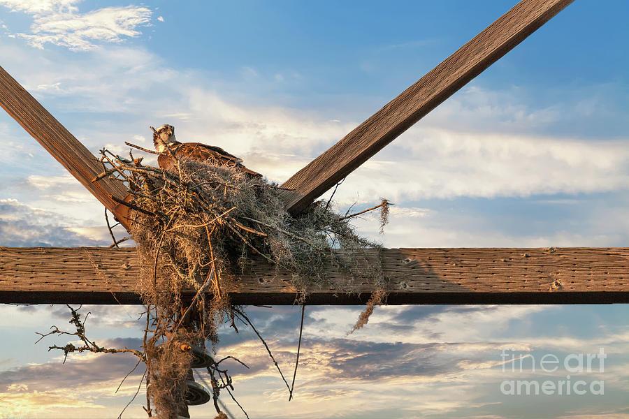 Building The Nest Photograph