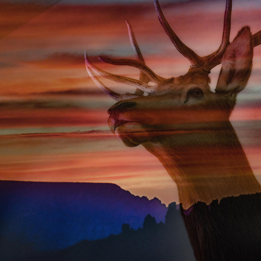 Bull Elk and Sedona Sunset by Ron White