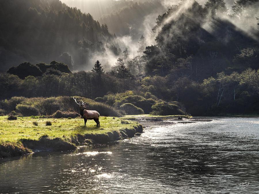 Bull Elk in Wilderness by Leland D Howard