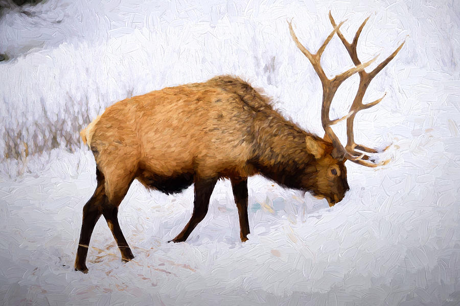 Bull Elk In Winter Photograph