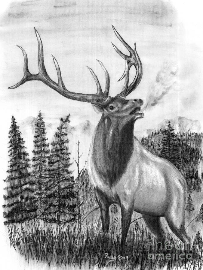 Bull Elk Drawing - Bull Elk Issuing Challenge by Russ  Smith