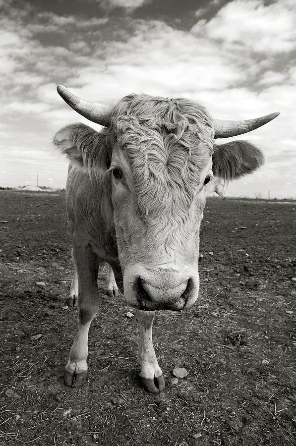 Bull Photograph - Bull by Jimmy Bruch