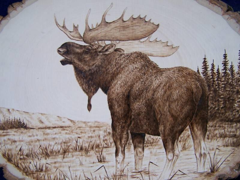 Moose Pyrography - Bull Moose by Adam Owen