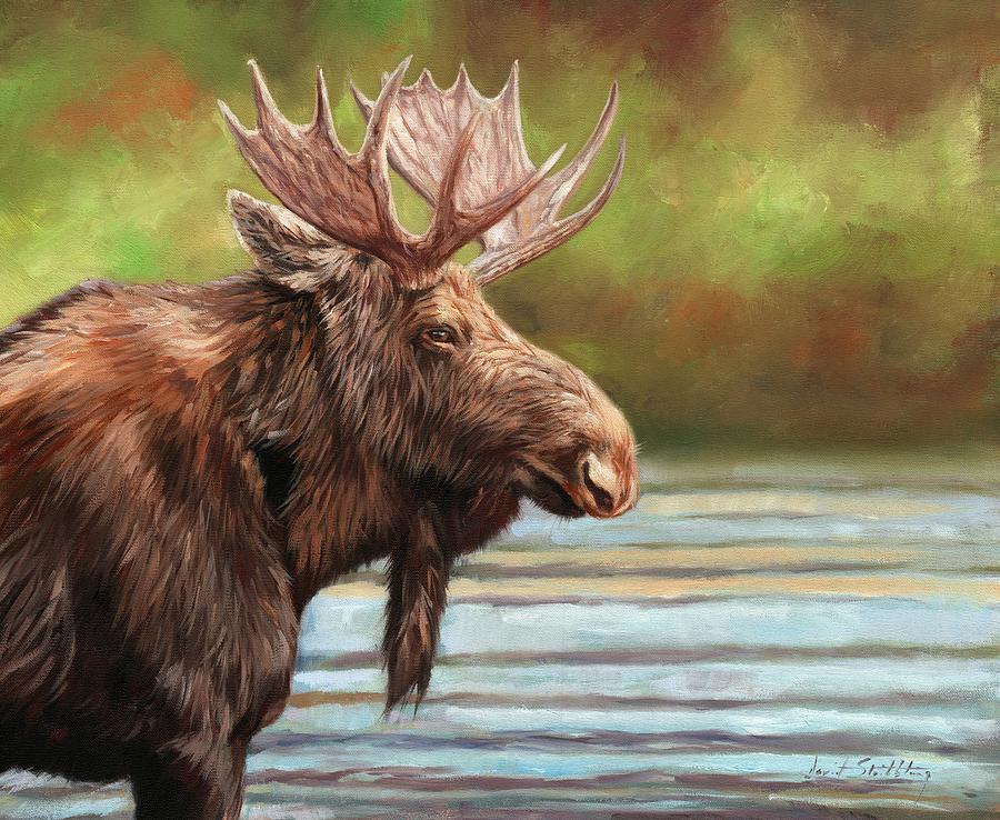Bull Moose by David Stribbling