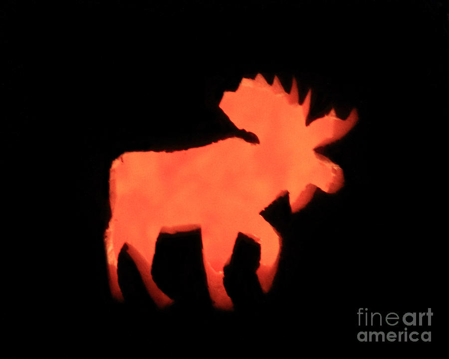Moose Photograph - Bull Moose Pumpkin by Lloyd Alexander