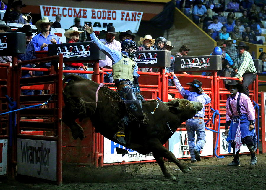 Bull Riding At The Grand National Rodeo Photograph by John King