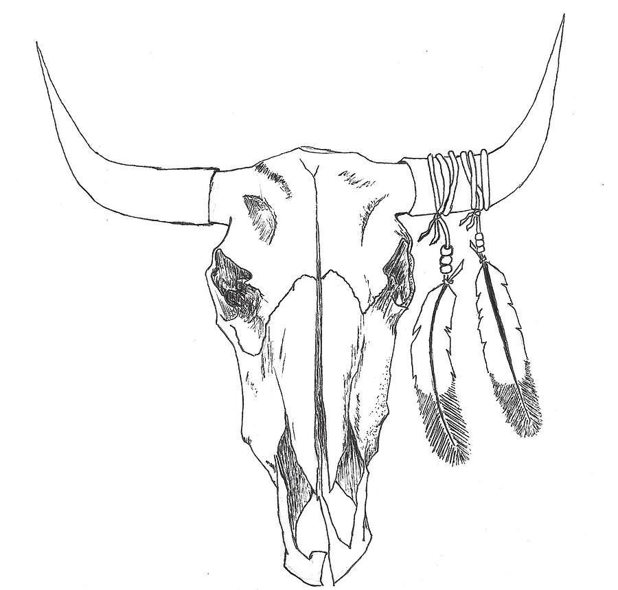 bull skull drawing wwwpixsharkcom images galleries