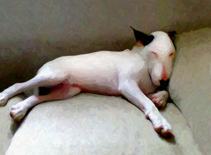 English Bull Terrier Digital Art - Bull Terrier Sleeping by Michael Tompsett