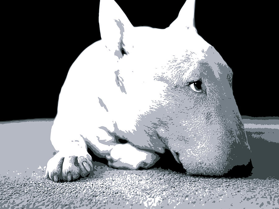 Bull Terrier White On Black Digital Art By Michael Tompsett - Bull terrier art