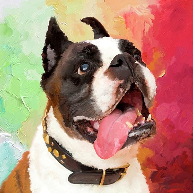 Bulldog by Portraits By NC