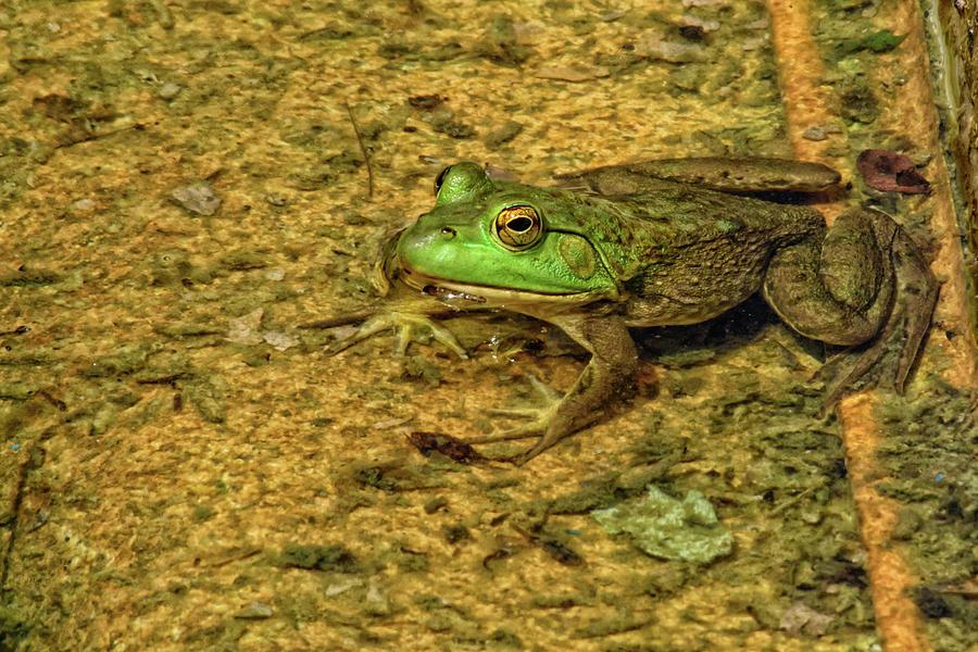 Bullfrog Photograph - Bullfrog by Gaby Swanson