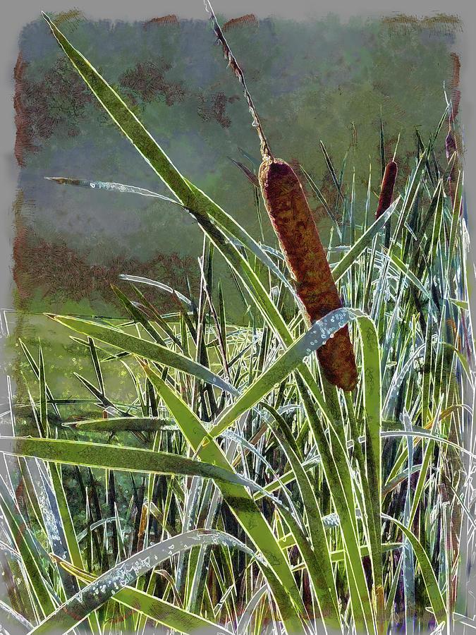Bullrushes Digital Art - Bullrush by Leslie Montgomery