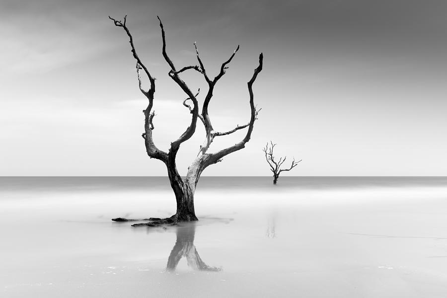 Bulls Island Photograph - Boneyard Beach Xv by Ivo Kerssemakers