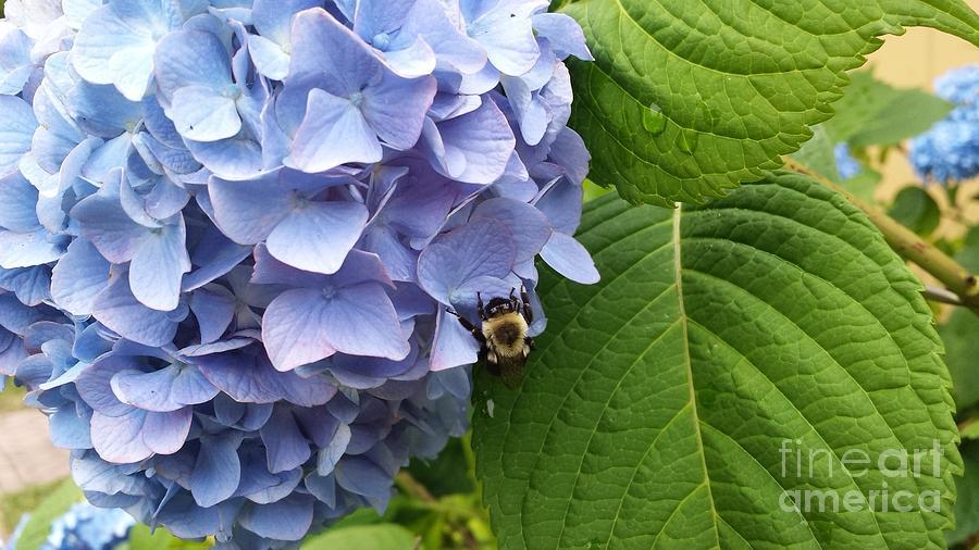 Environmental Photograph - Bumble Bee Blues by GJ Glorijean