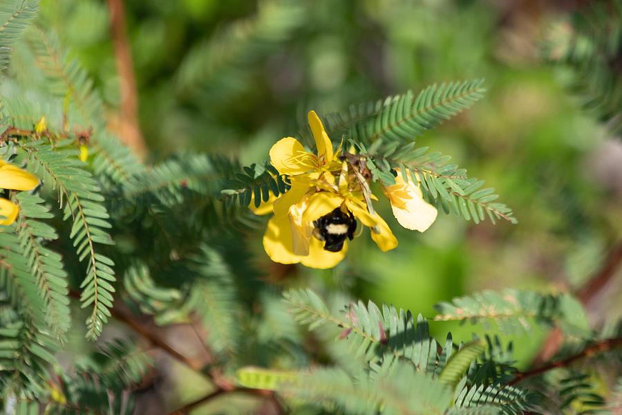 Bumblebee Photograph - Bumblebee Deep Into Work by JR Cox