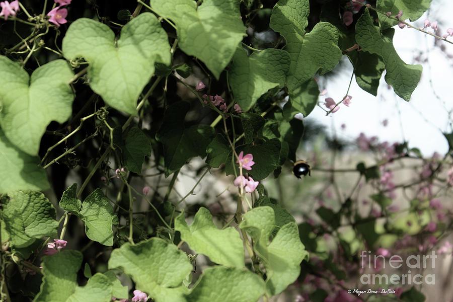Keywords Photograph - Bumble Bum by Megan Dirsa-DuBois